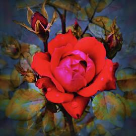 Crimson Glory Rose by Natalie Holland