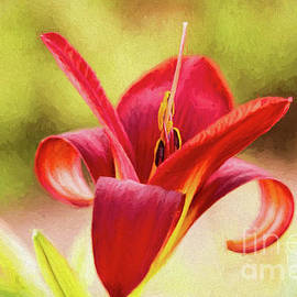 Crimson Red Lily by Sharon McConnell