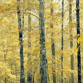 Crispy Fall by Rick Davis