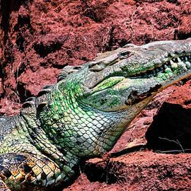 Crocodile Smile by Felipe Correa