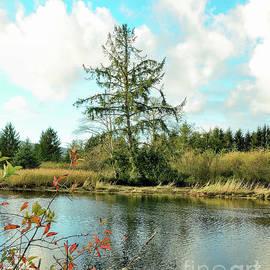 Crooked Tree by Beautiful Oregon