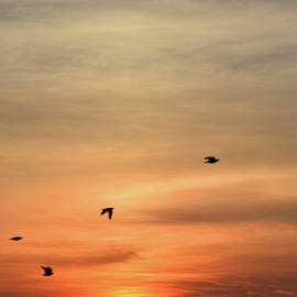 Crows At Sunrise by Robert Tubesing