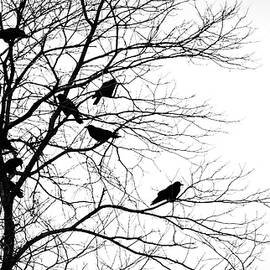 Crows in Tree by Michael Hills