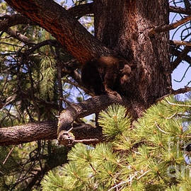 cub in El Dorado National Forest, California, U.S.A.-5 by PROMedias