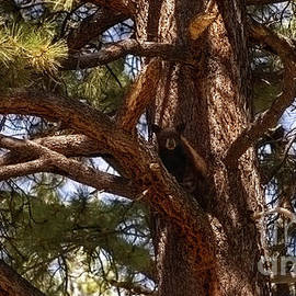 cub in El Dorado National Forest, California, U.S.A. by PROMedias
