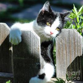 Cuddly Kitten by Shirley Dutchkowski