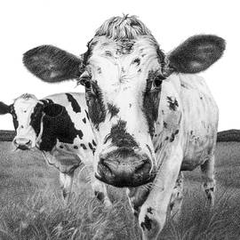 Curious Cows 2 by Lisa Molitor