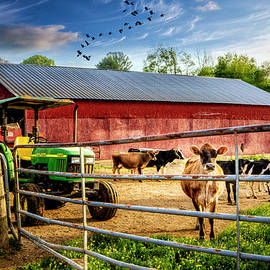 Curious Cows at the Dairy Farm Barns  by Debra and Dave Vanderlaan