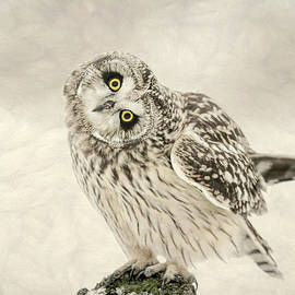 Curious Little Owl by Susan Hope Finley