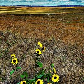 Custer National Monument Beauty by Suzanne Wilkinson