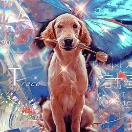 Cut dog by Laurence Stefani