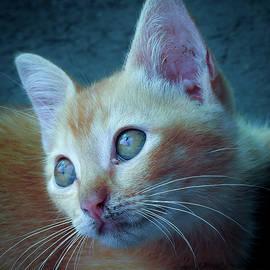 Cute kitten by Anita Gendt van