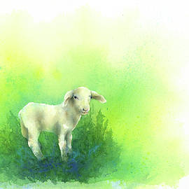 Cute little lamb watercolor painting by Karen Kaspar