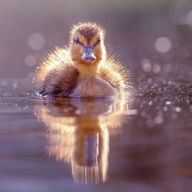 Cute Overload Series - Innocence in Feather Suit by Roeselien Raimond