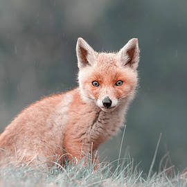 Cute Overload Series - The Fox Cub by Roeselien Raimond