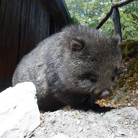 Cute Wombat by Kathrin Poersch