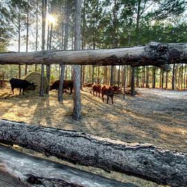 Cracker Cattle Corral by Robert Douglas Dalles