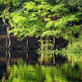 Cypress Afire by Bill Chambers