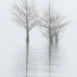 Cypress in Fog 0241 by Dan Beauvais
