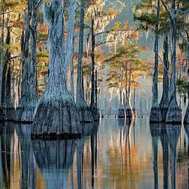 Cypress Reflection by Jennifer Robin