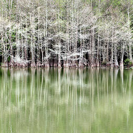 Cypress Slough Reflection by David T Wilkinson