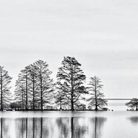 Cypress Trees at Lake Mattamuskeet NWR by Bob Decker