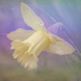 Daffodil  by Deb Henman