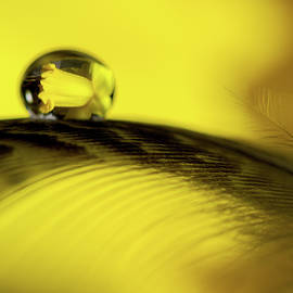 Daffodil Reflection in Waterdrop by Jean Noren