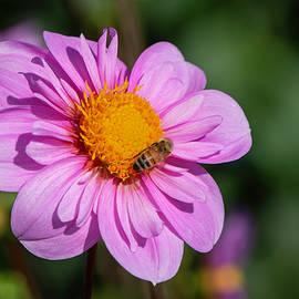 Dahlia and Bee by Teresa Wilson