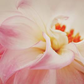 Dahlia Center Beauty by Terry Davis
