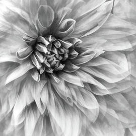 Dahlia Dream Vertical Black And White by Sharon McConnell
