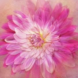 Dahlia Swirl by Terry Davis