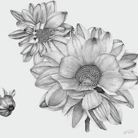 Dahlia's by Patricia Hiltz