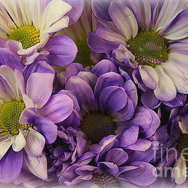 Daisies Lovely in Lavender and White by Dora Sofia Caputo