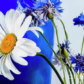 Daisy And Cornflowers. by Alexander Vinogradov