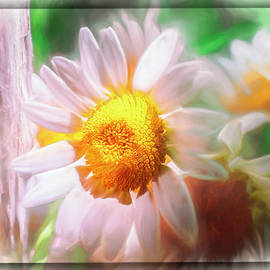 Daisy Day by Jim Love
