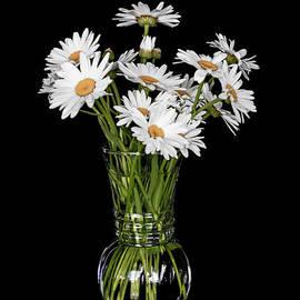 Daisy Daze by Connie Allen