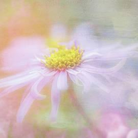 Daisy Delight by Terry Davis