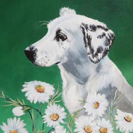 Daisy Dog by Katrina Nixon