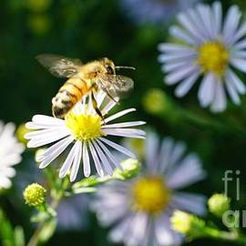 Daisy Fleabane, and the Bee by Maria Faria Rodrigues