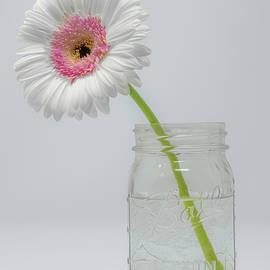 Daisy in a Ball Jar by Sandi Kroll