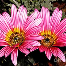 Daisy Love by Leanne Seymour