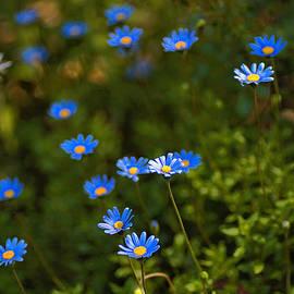 Daisy Patch by Joy Watson