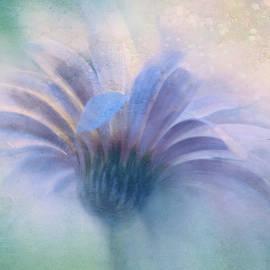 Daisy Sparkle by Terry Davis