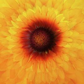 Daisy Swirl by Terry Davis