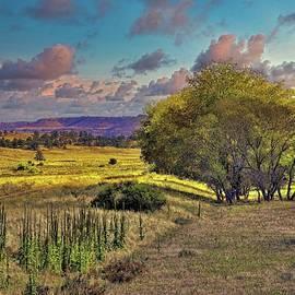 Dakota Grassland by Michael R Anderson