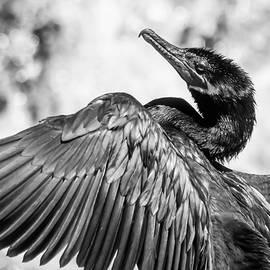 Dance of the Cormorant by Bonny Puckett