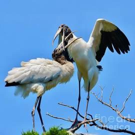 Dancing Beak to Beak by AnnaJo Vahle