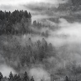 Dancing With Fog in Monochrome by Wes and Dotty Weber