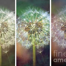 Dandelion Dreams - Collage by Kerri Farley